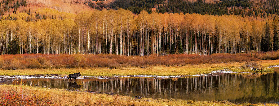 Willow Lake Pano by Ryan Moyer