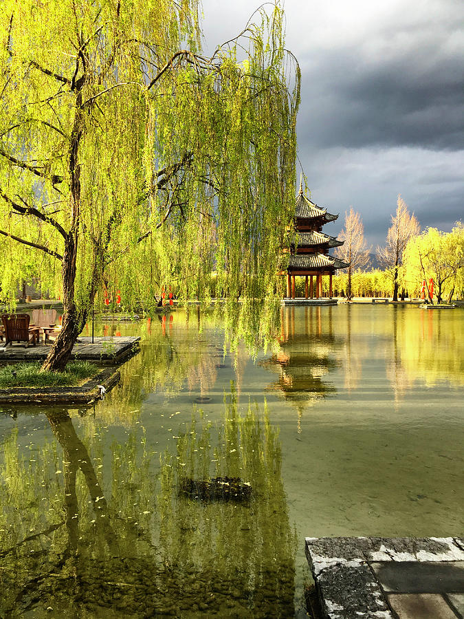 Willow Photograph - Willow Tree In Liiang China II by Linda Brody