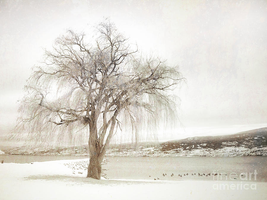 Sepia Photograph - Willow Tree In Winter by Tara Turner