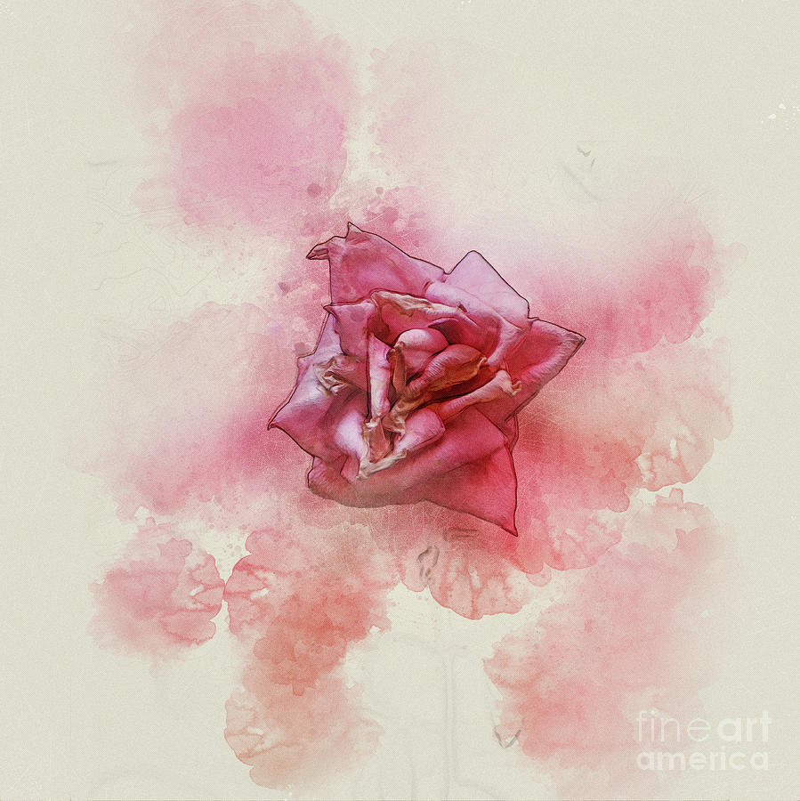 wilted dying pink rose photograph by humorous quotes
