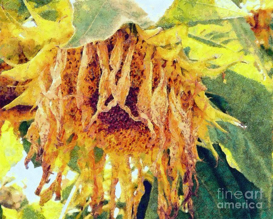 Sunflower Photograph - Wilted Sunflower - What A Day by Janine Riley