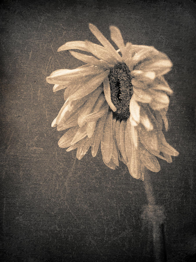 Flower Photograph - Wilting In Colour by Tara Turner