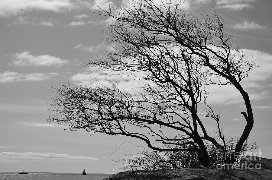 Tree Photograph - Wind Blown by Catherine Reusch Daley