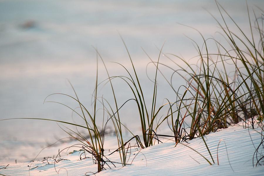 Wind Blown by Gary Smith