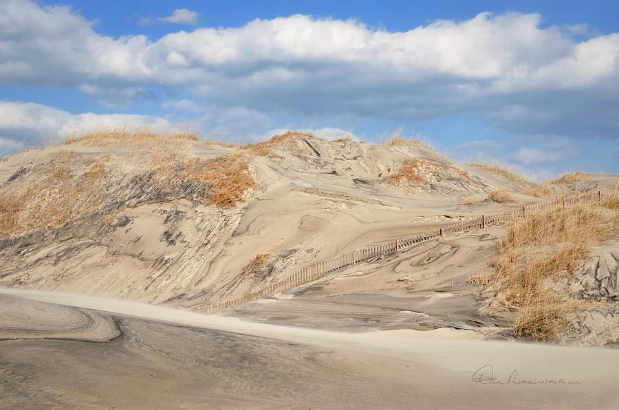 Wind Blown - Pea Island 7464 Photograph