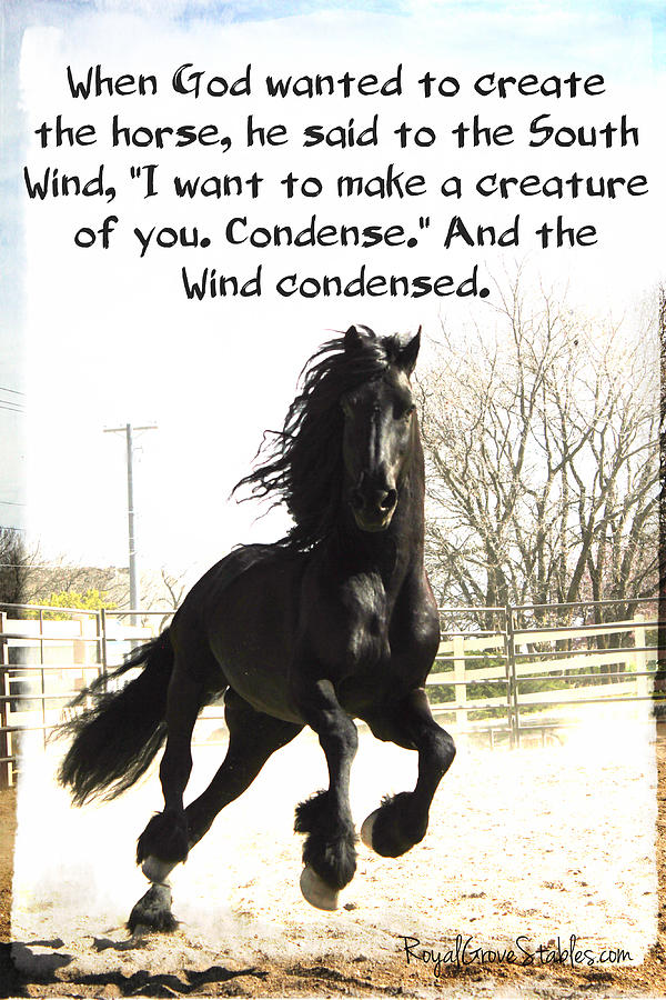 Wind in Your Mist by Carol Whitaker