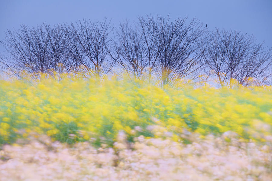 Breeze Photograph - Wind Strokes by Awais Yaqub