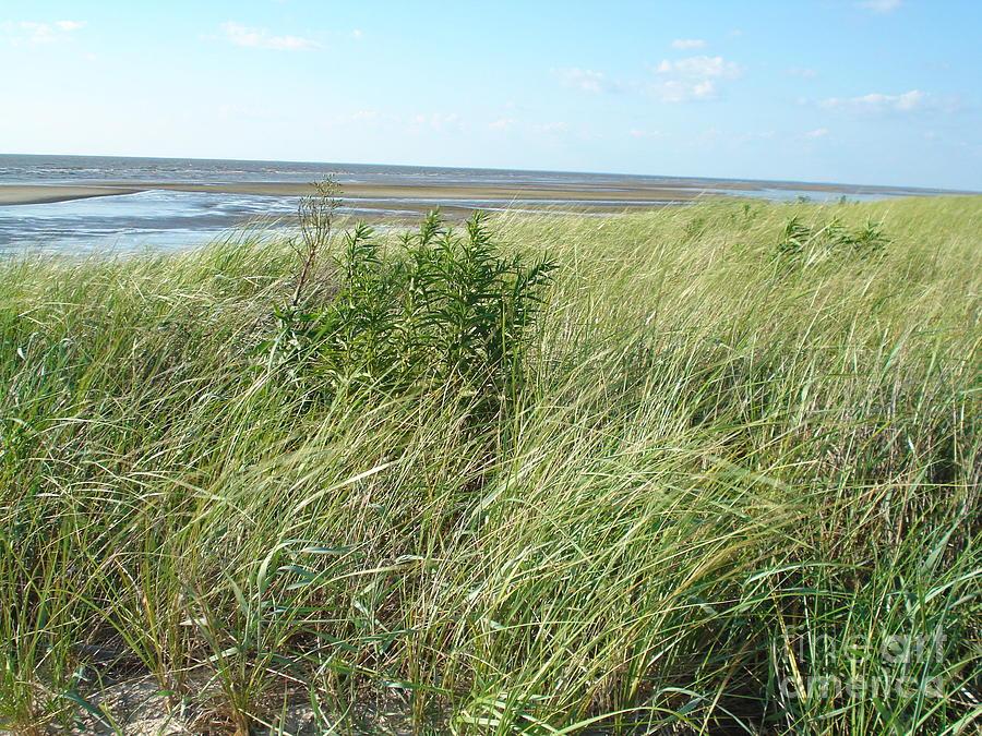 Beaches Photograph - Wind Thru The Bushes by Amanda Heavlow
