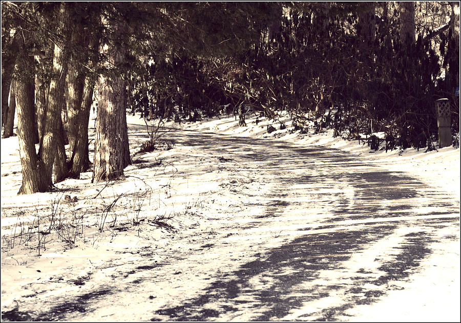 Forest Photograph - Winding Path by Elizabeth Babler
