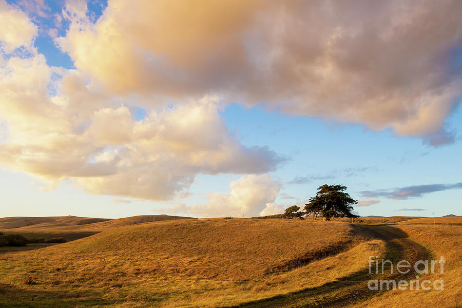 Winding Photograph - Winding Road Leads To A Lone Tree by Sharon Foelz