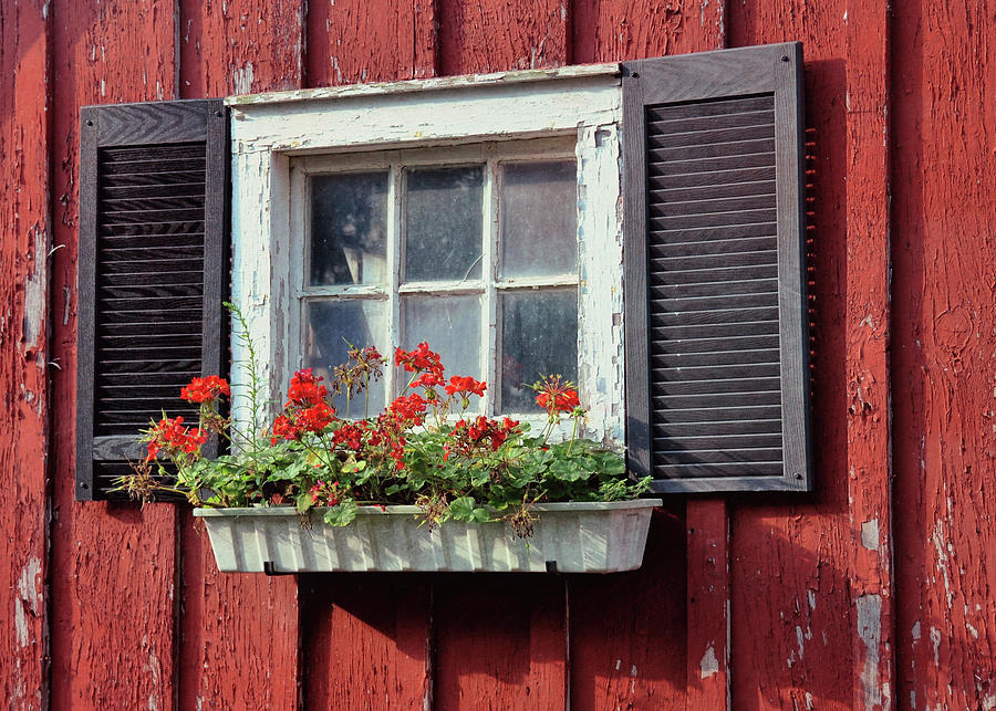 Bale Photograph - Window Box by Dressage Design