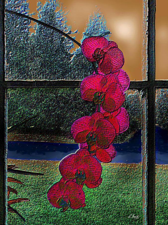 Window Dressing Photograph by Gordon Beck