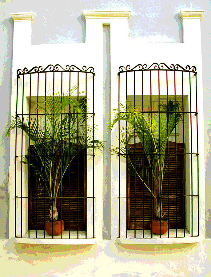 Darian Day Photograph - Window Ferns By Darian Day by Mexicolors Art Photography
