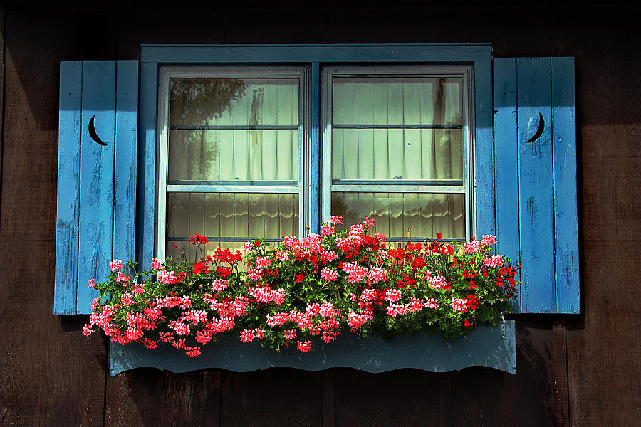 floral Windows
