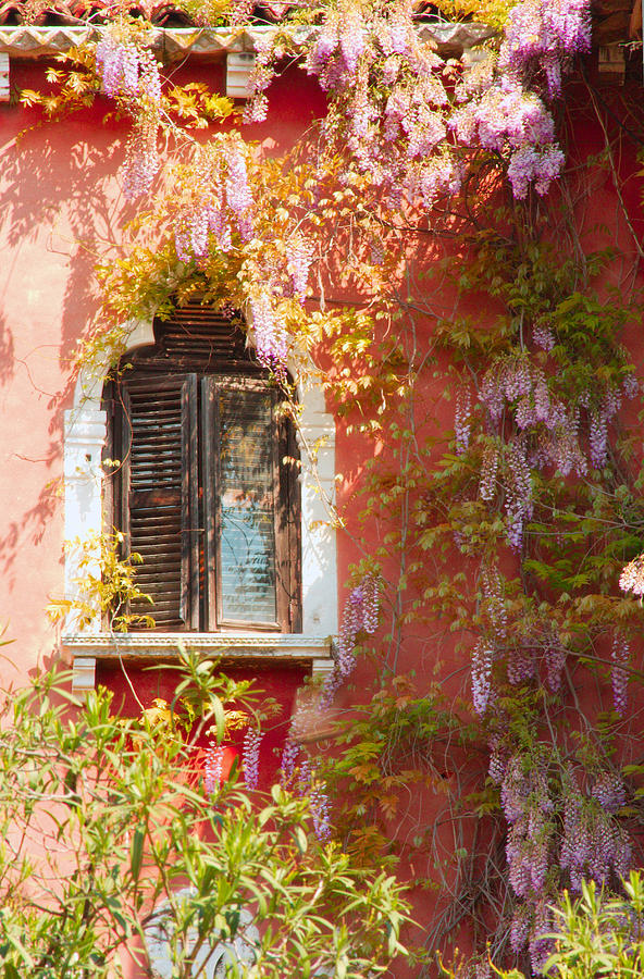 Venice Photograph - Window In Venice With Wisteria by Michael Henderson