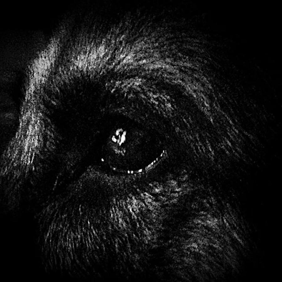 Dog Photograph - Window Light Reflection by Frank J Casella