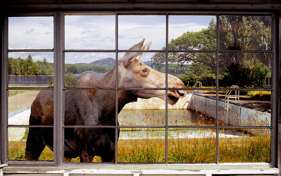 Moose Photograph - Window - Moosehead Lake by Peter J Sucy