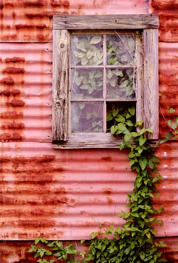 Window Photograph - Window Of Ivy by Andrew Giovinazzo