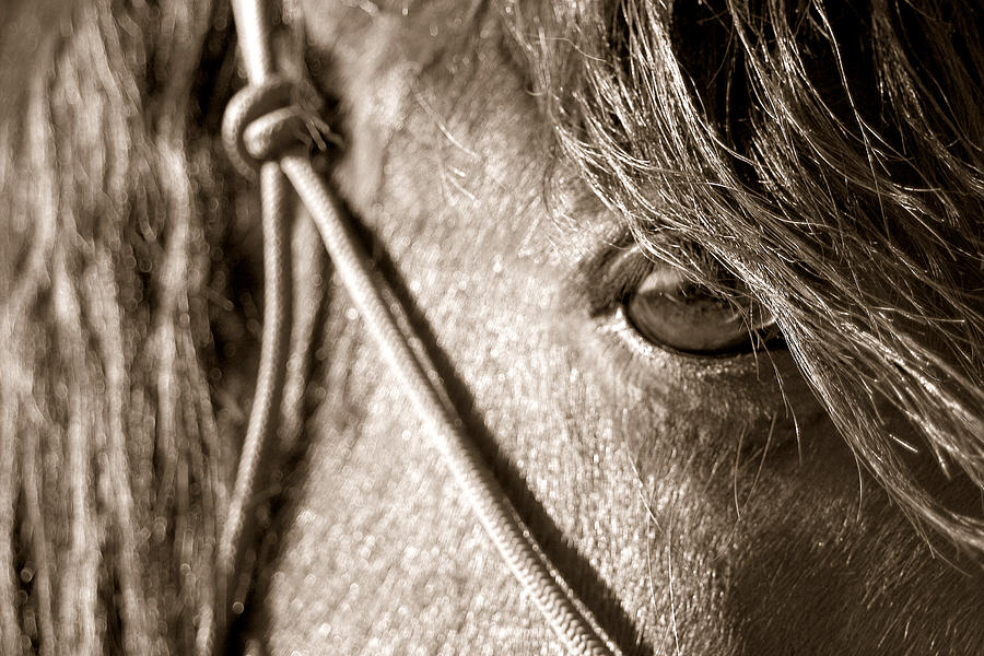 Horse Photograph - Window To The Soul by Christine Hauber
