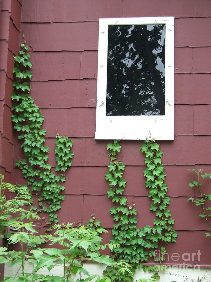 Windo Photograph - Window by Vanda Sucheston Hughes