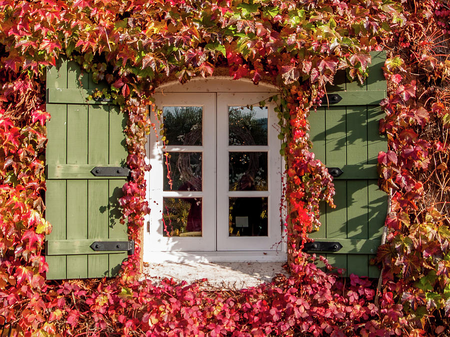 Window,shutters,and Fall Colors Photograph
