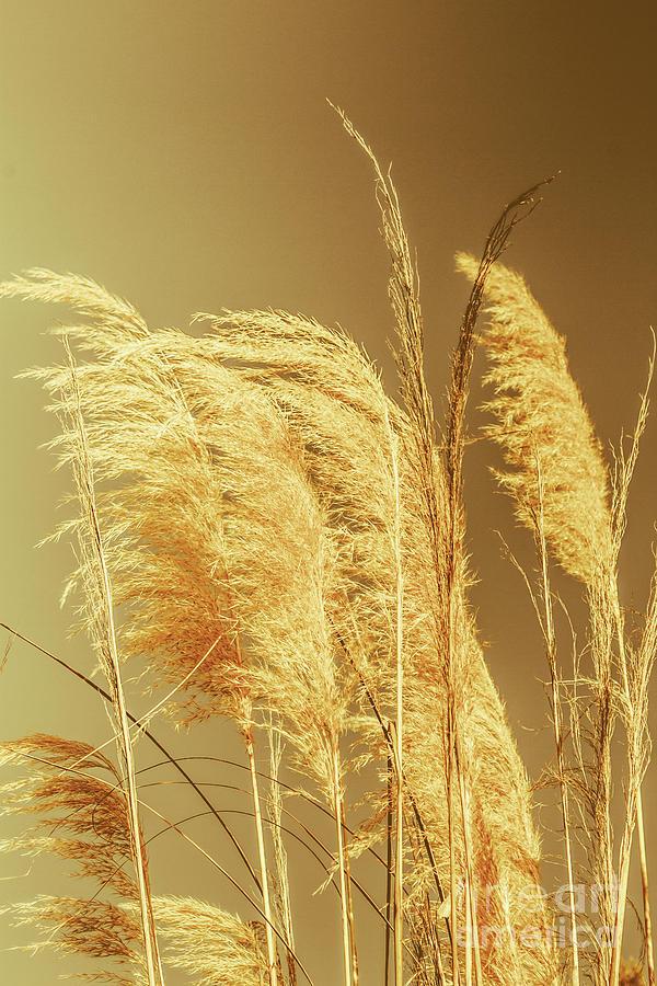 Dry Photograph - Windswept Autumn Brush Grass by Jorgo Photography - Wall Art Gallery