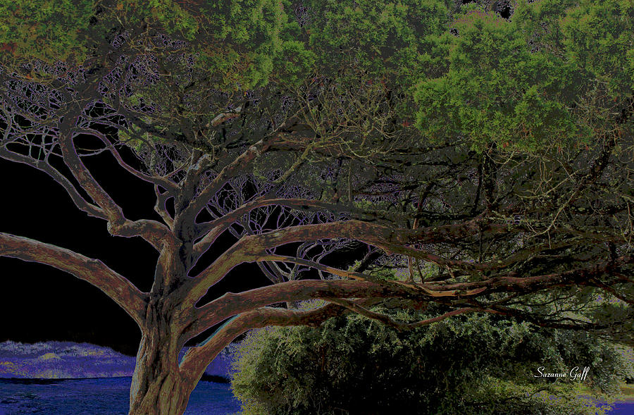 Tree Photograph - Windswept Dreams by Suzanne Gaff
