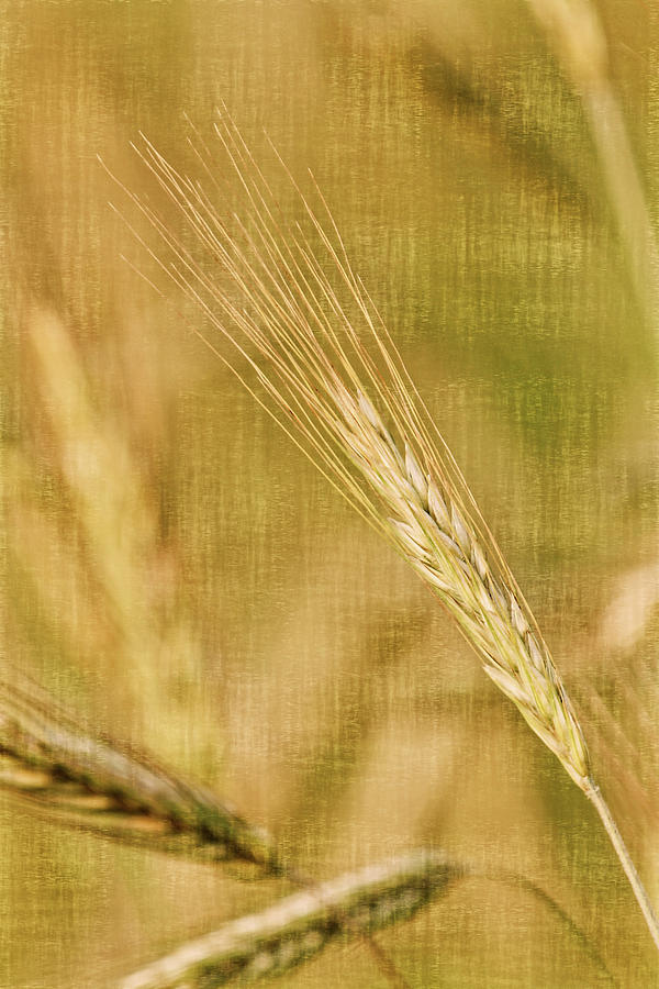 Grasses Photograph - Windswept II by Leda Robertson