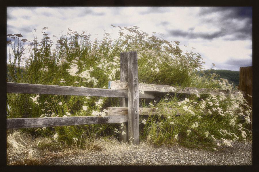 Landscape Photograph - Windswept by Joan Carroll