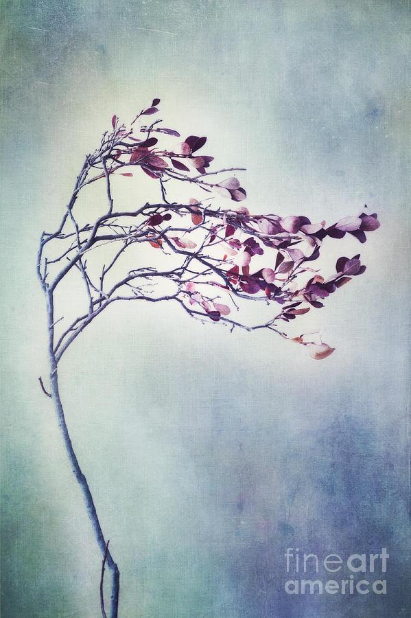 Blueberry Branch Photograph - Windswept by Priska Wettstein
