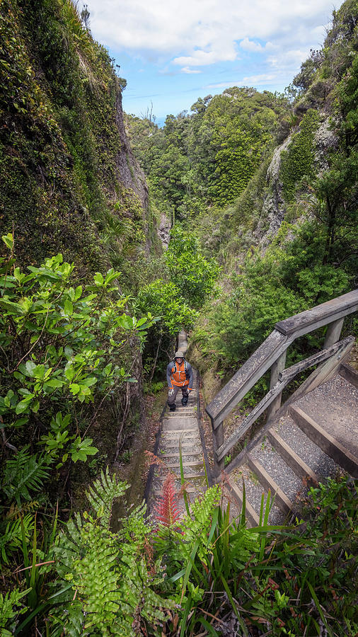 Joan Carroll Photograph - Windy Canyon Great Barrier Island New Zealand by Joan Carroll