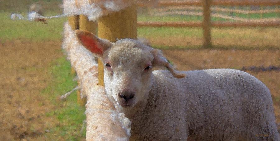 Animal Photograph - Windy Ear by Kathy Bassett