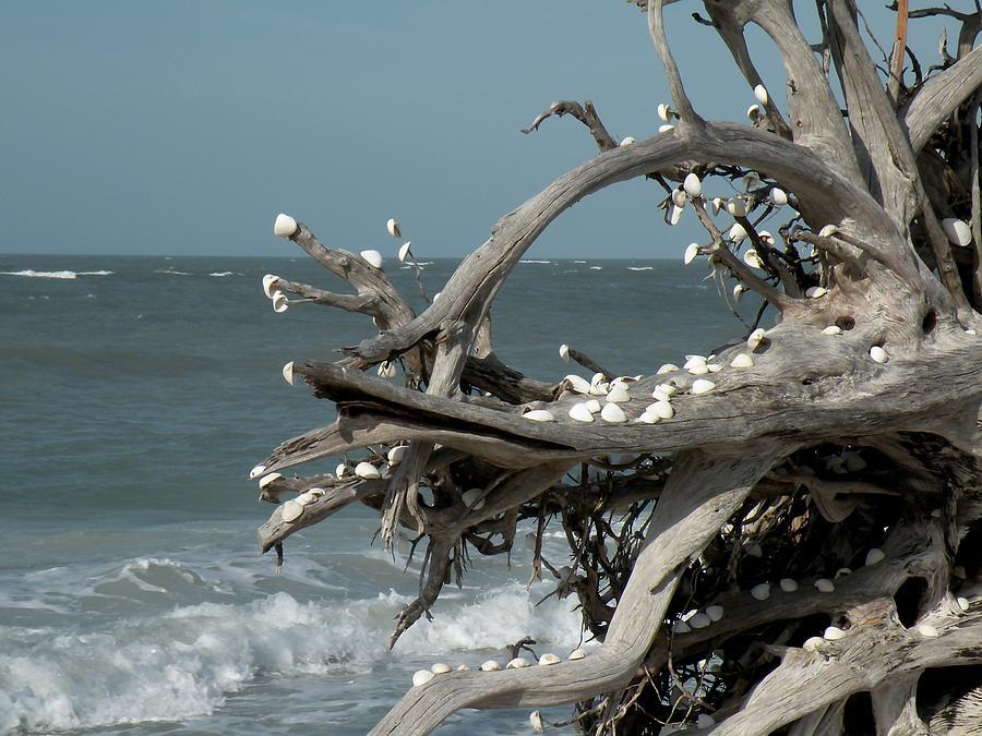 Driftwood Photograph - Windy Sea by Rosalie Scanlon