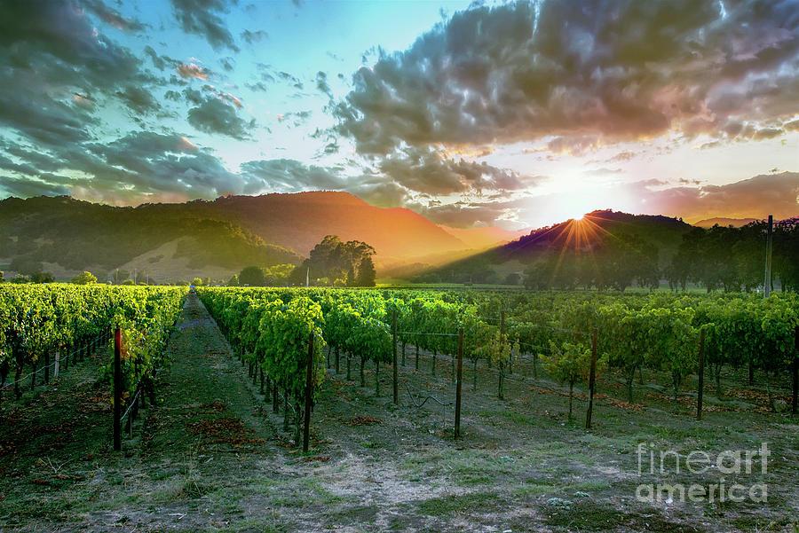 Napa Photograph - Wine Country by Jon Neidert