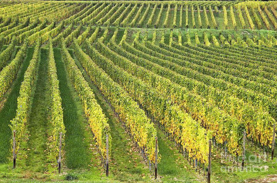 Heiko Photograph - Wine Growing by Heiko Koehrer-Wagner
