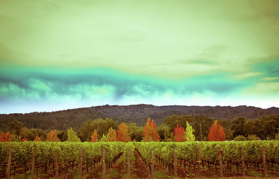 Wine Photograph - Wine In Time by Ryan Weddle