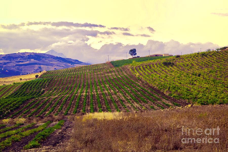 Wine Photograph - Wine Vineyard In Sicily by Madeline Ellis