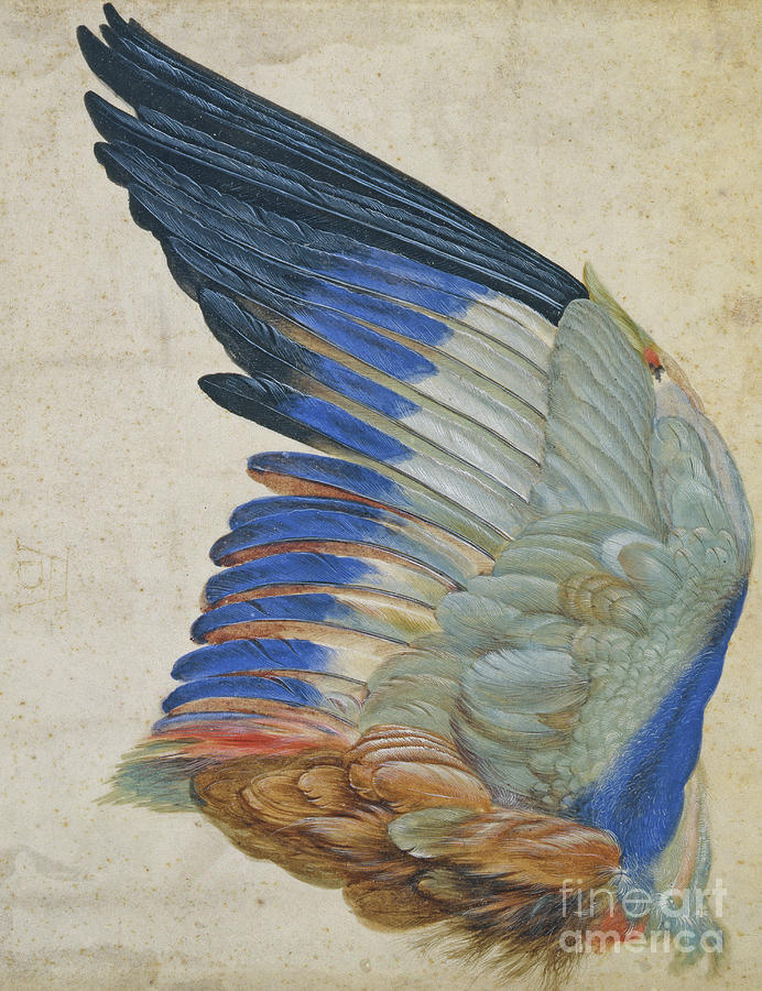 Roller Painting - Wing of a Blue Roller by Hans Hoffmann
