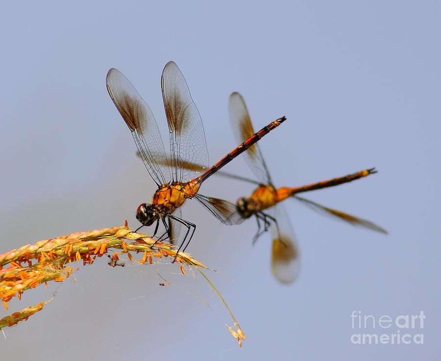 Animal Photograph - Wingman by Robert Frederick