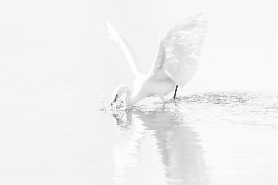 Nature Photograph - Wings Of An Angel by Michael McStamp