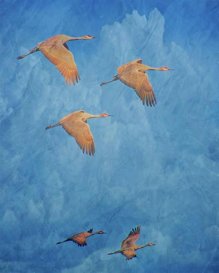 Nature Photograph - Wings of the Ancient, Sandhill Cranes by Zayne Diamond Photographic