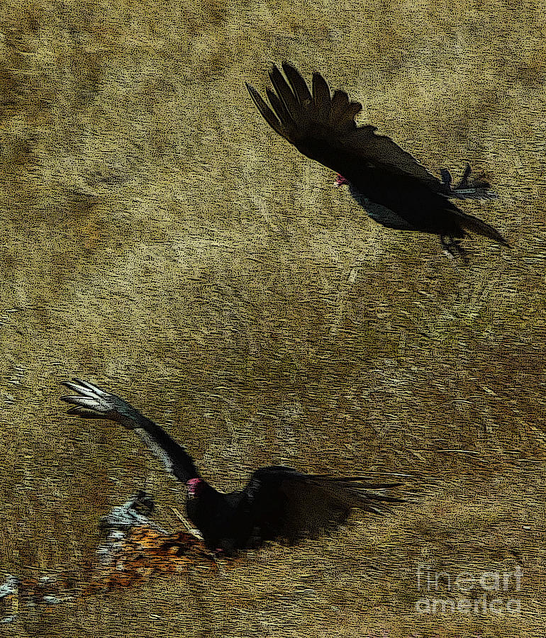 Turkey Vultures Photograph - Wings Spread Wide by JoAnn SkyWatcher