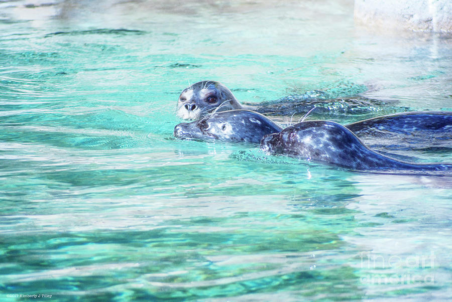 Seals Photograph - Wink by Kimberly Tilley