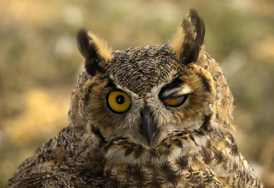 Owl Photograph - Wink by Mike  Dawson