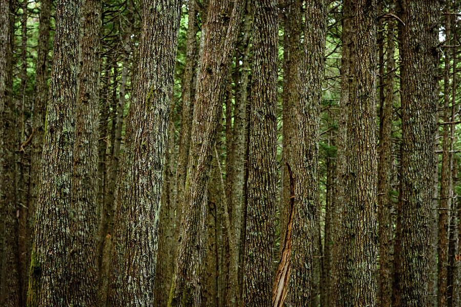 Winner Creek Trail Photograph - Winner Creek Trail by Jeff Campbell