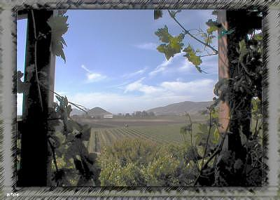 Wine Digital Art - Wino View by Art by Brenda Starr