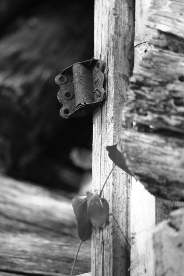 Ansel Adams Photograph - Winslow Cabin Door Detail by Curtis J Neeley Jr