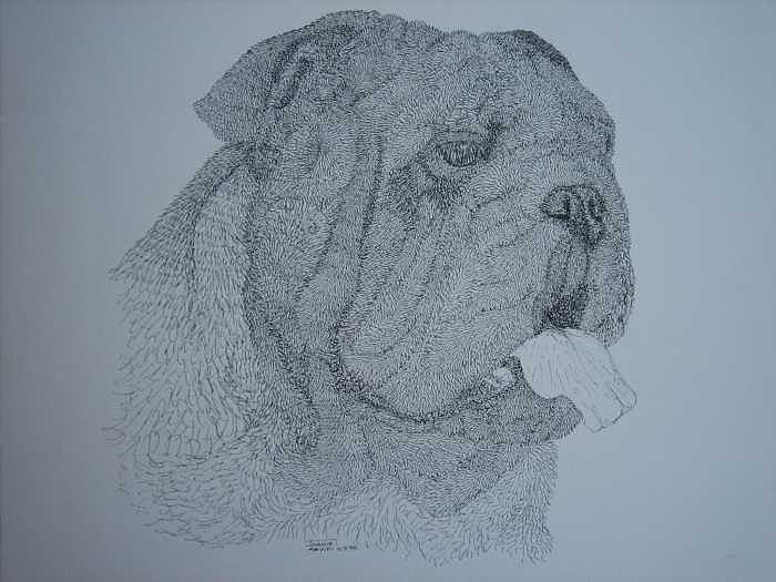 Bulldog Drawing - Winston by Joanie Arvin