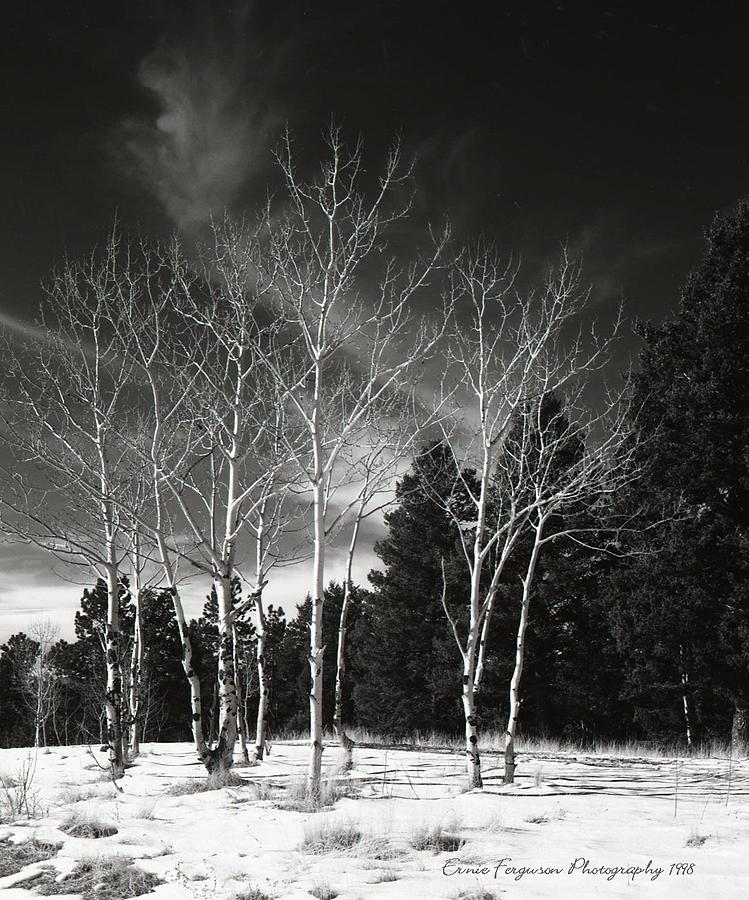 Landscape Photograph - Winter Aspens 226 by Ernie Ferguson