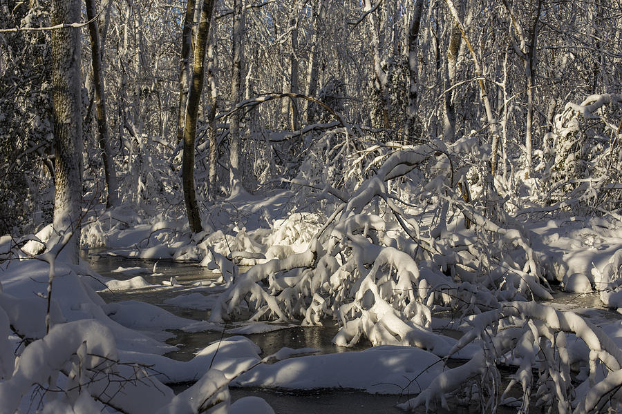 Andrew Pacheco Photograph - Winter At Borden Brook by Andrew Pacheco